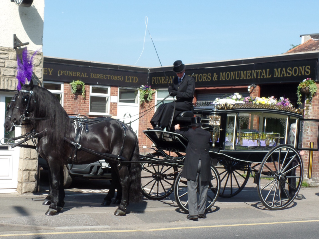 Horse Drawn Hearse, wearing purple plumes and carrying colourful coffin